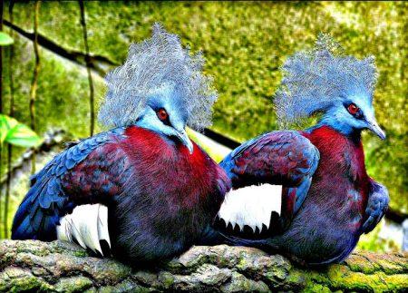 طيور الحمام بالصور (4)