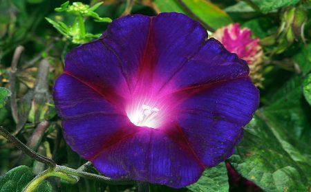 اجمل صور لزهرة البنفسج (1)