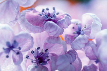 رمزيات زهور البنفسج (1)