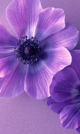 رمزيات زهور البنفسج (3)