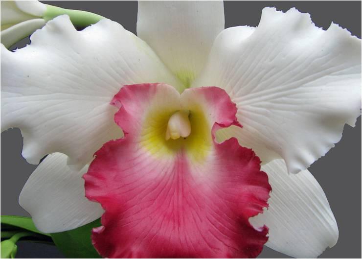 6138291c96a28 صور زهرة الأوركيد اجدد خلفيات ورمزيات HD لزهور الأوركيد