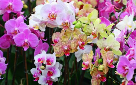 Orchids in the Kew Gardens Orchid exhibition 2006