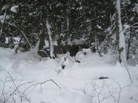 Deep snow in the woods