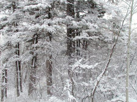 صور تعبر عن الشتاء (4)
