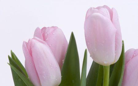 زهرة البنفسج احلي خلفيات ورمزيات ورد بنفسج 3