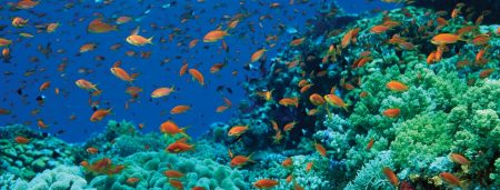 اماكن السياحة في شرم الشيخ بالصور (1)