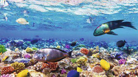 اماكن السياحة في شرم الشيخ بالصور (2)