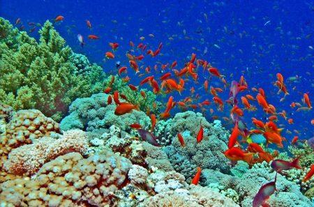 اماكن السياحة في شرم الشيخ بالصور (3)