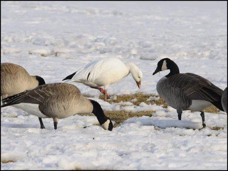 خلفيات فصل الشتاء (3)