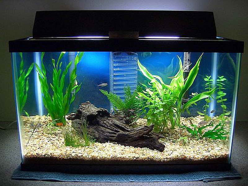 Hd for Green water in fish tank