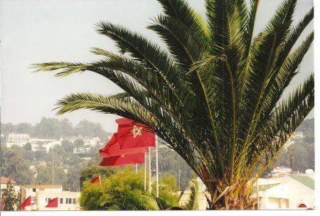رمزيات العلم المغربي (3)