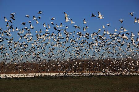اسراب طيور (2)