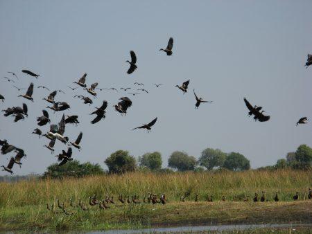 اسراب طيور (3)