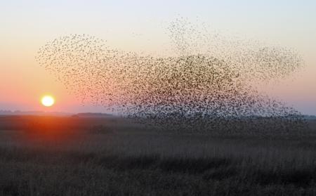 خلفيات طيور مهاجرة