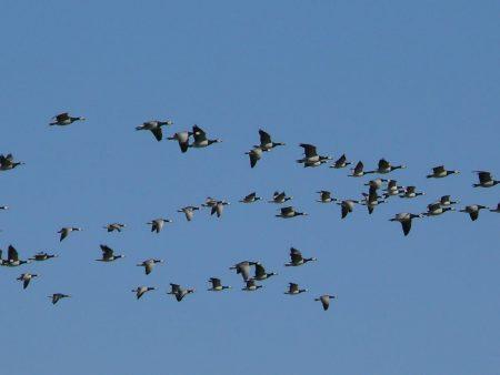 خلفيات وصور طيور مهاجرة (2)