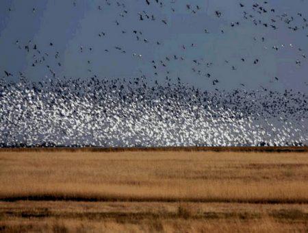 خلفيات وصور طيور مهاجرة (3)