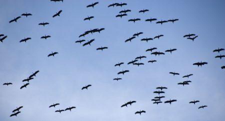 رمزيات طيور مهاجرة (3)