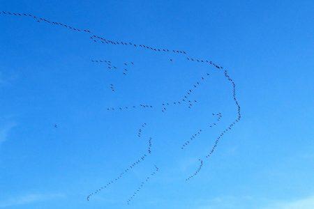 صور الطيور المهاجرة (2)