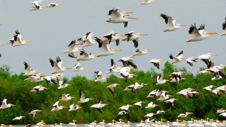 صور جميلة عن هجرة الطيور (1)