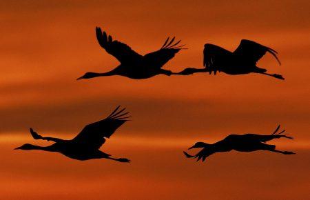 جميلة عن هجرة الطيور 1