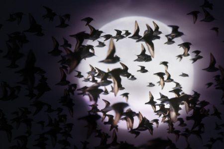 صور عن هجرة الطيور في سرب طيور مهاجرة روعة (4)