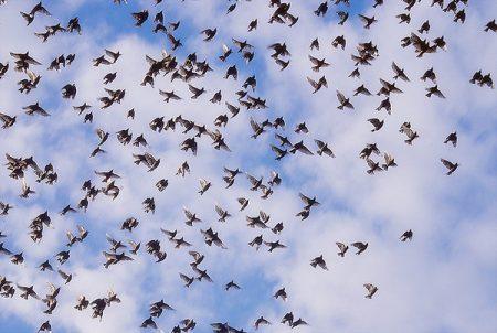 عن هجرة الطيور 3