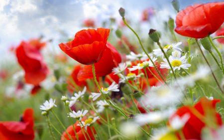 خلفيات عن الربيع (1)