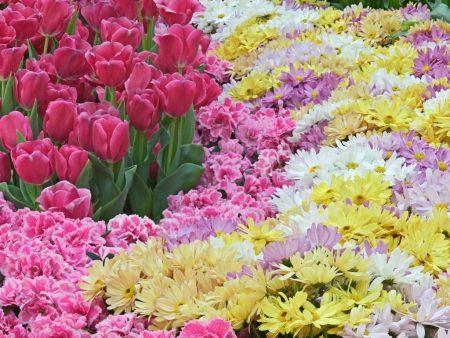 خلفيات عن الربيع (3)