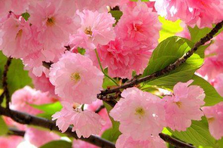 رمزيات ربيع وخلفيات روعة لفصل الربيع (3)