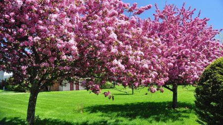 رمزيات فصل الربيع بجودة عالية 2017 (2)