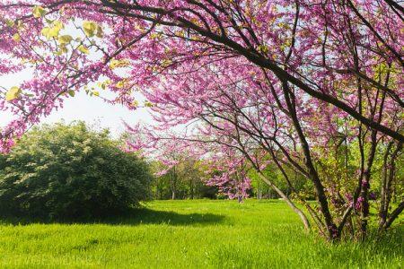 رمزيات وخلفيات وصور عن فصل ربيع 2017 (3)
