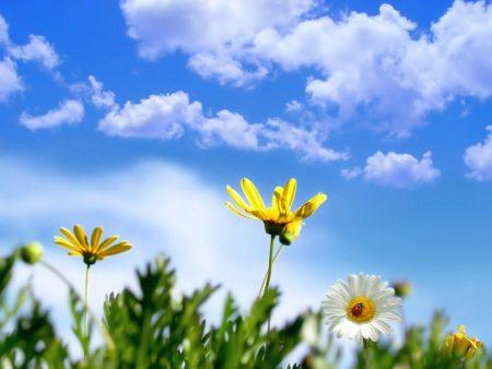 صور الربيع (2)