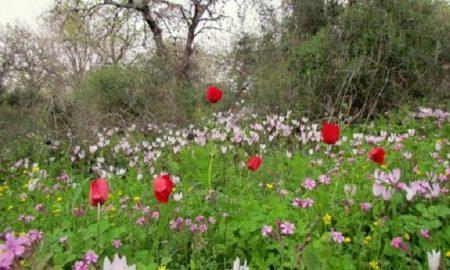 صور خلفيات فصل الربيع 2017 (1)