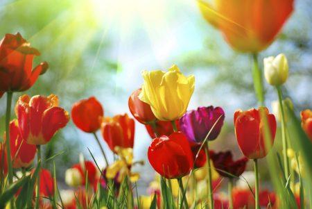 صور عن فصل الربيع 2017 رمزيات وخلفيات الربيع (2)