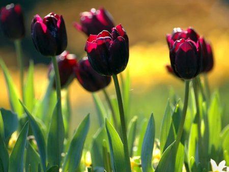 صور عن فصل الربيع 2017 رمزيات وخلفيات الربيع (3)