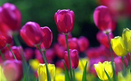 صور عن فصل الربيع 2017 رمزيات وخلفيات الربيع (4)