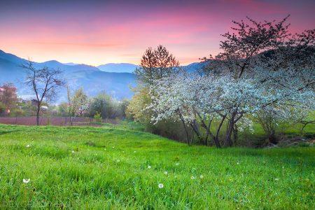 صور فصل الربيع 2017 (2)