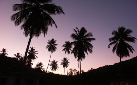 palm tree pictures (2)