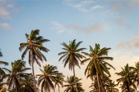 palms (1)
