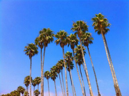 palms (2)