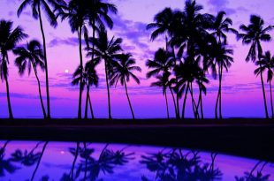 palms photos (2)