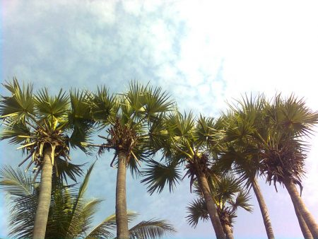 palms photos (3)