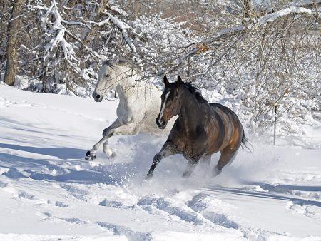 صور خيول 2017 1