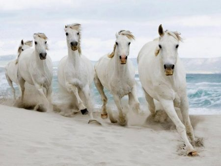 احلي صور خيول 2017 (2)