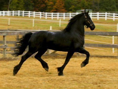 خلفيات خيول (1)