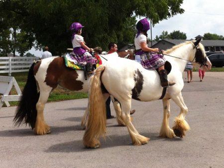 خلفيات خيول (2)