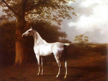 خلفيات خيول (3)