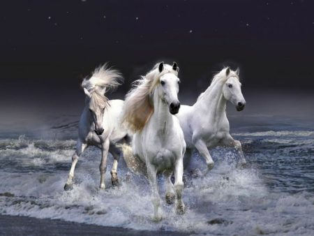 رمزيات خيول جديدة صور رمزيات خيل بجودة HD (4)