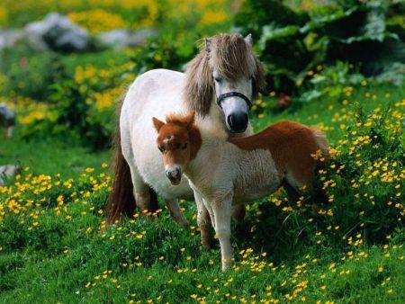 رمزيات خيول جديدة (1)