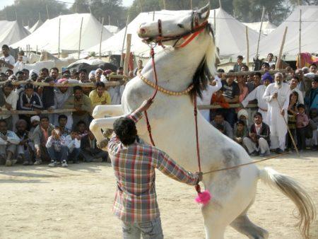 رمزيات خيول جديدة (2)